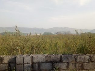 A residential plot of land measuring 1,446.19M2 with C of O for sale at katampe district