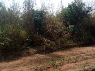 Two plots of land behind federal university of technology owerri